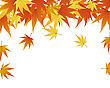 Pattern Of Autumn Maples Leaves. Vector Illustration.