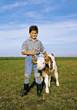 child farm cow cattle boy mammal stock photo
