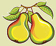 Pears Illustration.Vector Fresh Fruits Illustration For Design