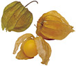 Physalis Fruits stock photography