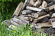 Pile Of Cut Firewood Spills To The Ground. stock photo