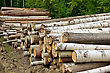 Pile Of Harvested Wood Of Birch, Pine And Aspen Against A Background Of Green Forest stock photo