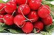 pile of radish stock photography