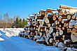 Pile Of Timber In The Winter Against The Backdrop Of Trees, Green Pine And Blue Sky