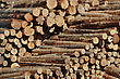 Piles Of Pinus Radiata Logs For Export At Port Of Lyttleton, South Island, New Zealand stock image