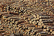 Piles Of Pinus Radiata Logs For Export At Port Of Lyttleton, South Island, New Zealand
