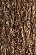 Pine Bark Texture Pattern. EPS 10 Vector Illustration Without Transparency