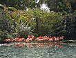 Pink Flamingos In A Tropical Pond stock photo