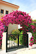 Pink Flowers Arch At The House stock photography