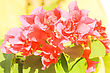 Pink Flowers At Sun Light. Flowers On Green Background stock image