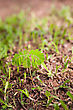 Small Plant Growing From Soil On Ground With Green Grass stock image