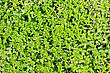 Plant Texture - Thick Carpet Of Leaves stock photo