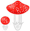 Poisonous Mushrooms Isolated On White Background. Agaric Mushroom. Amanita Poisonous Mushrooms