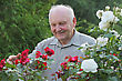 Portrait Of Old Man - Grower Of Roses Next To Rose Bush In His Beautiful Garden stock photo