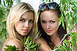 Portrait Of Two Beautiful Women Behind The Tree Branches stock photography