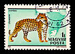Postage Stamp With A Picture Of A Leopard Is Isolated On A Black Background stock photo