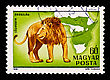 Postage Stamp With A Picture Of A Lion Isolated On A Black Background stock image