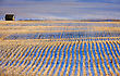 Prairie Landscape In Winter Saskatchewan Canada Rural