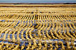 Prairie Landscape In Winter Saskatchewan Canada Stubble Field stock photography