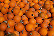 Thanksgiving Pumpkins Lines Up During The Halloween Holiday stock photography