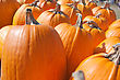 Pumpkins Lines Up During The Halloween Holiday. stock photography