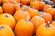 Pumpkins Lines Up During The Halloween Holiday stock photography