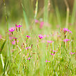 Purple Wildflowers In Blooming, Shallow Depth Of Field stock photography