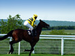 Race Horse & Jockey stock photography