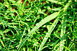 Rain Drops On Green Grass. stock image