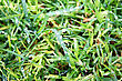 Small Rain Drops On Green Grass. stock photo