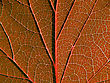 Red Autumn Sheet stock photography