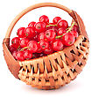 Red Currants In Basket Isolated On White Background Cutout stock image