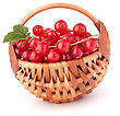 Red Currants In Basket Isolated On White Background Cutout stock photo