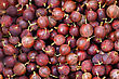 Red Gooseberry Close-up Background stock photo