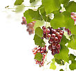 Red Grape On The Vines stock photography
