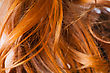 Red Hair Macro stock image