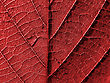 Red Leaf Background stock photography