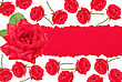 Red roses with torn paper stock photography