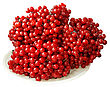 Red Viburnum Berries, Isolated On White Background