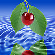 Reflection Of A Branch With Green Leaf And Red Cherry In Water. Close-up. Studio Photography stock photo