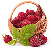 Ripe Raspberries In Basket Isolated On White Background Cutout stock photography