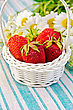 Ripe Red Strawberries In A White Wicker Basket, A Bouquet Of Chamomile On A Background Of Green Striped Napkin stock photo