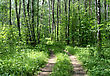 Road In A Summer Birch Forest stock photography
