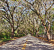 Road With Spanish Moss On The Trees stock photo