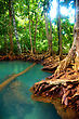 Roots Of Mangrove Trees In Rainforest, Thailand