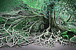 Magical Roots Of The Magic Tree stock photography