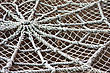 Roped Spider Web stock photo