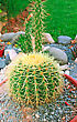 Round And Long Cactuses In The Garden stock image
