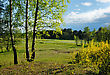 Rural Landscape, The Young Leaves Of The Birches, The Beginning Of May stock photo