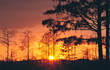 sunsets trees stock photo